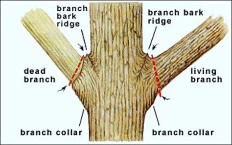 tree pruning part