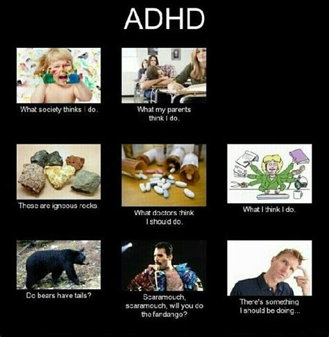 Add Meme - wait do bears have tails do they totally relatable pinterest funny adhd funny and so me