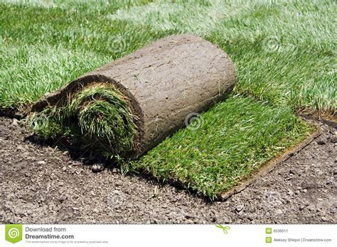 when to put sod roll of sod and green grass stock image image 6536011