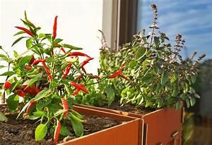 Balkonbepflanzung Im Herbst : platzsparende nachhaltige balkonbepflanzung im herbst ~ Markanthonyermac.com Haus und Dekorationen