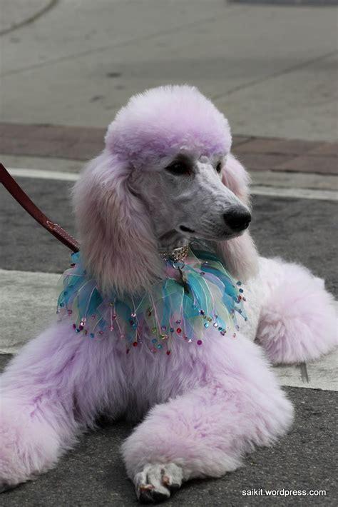 woofstock  dog show  toronto random repository