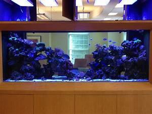 Aquarium Led Beleuchtung : aquarium led beleuchtung fotos beste reef aquarium led beleuchtung galerie orphek ~ Frokenaadalensverden.com Haus und Dekorationen
