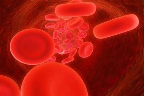 laborbefund wie blut funktioniert gesundheitsportal