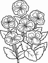 Coloring Flower Flowers sketch template