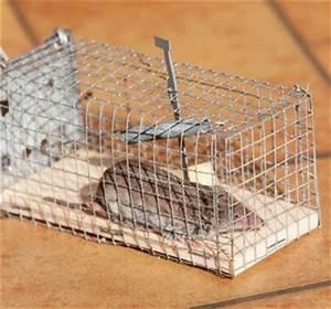 Comment Se Debarrasser Des Rats : prix d ratisation maison quelle solution pour quel prix habitatpresto ~ Melissatoandfro.com Idées de Décoration
