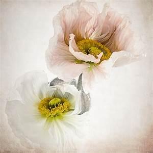 Bilder Bäume Gemalt : gemalt mit licht foto bild pflanzen pilze flechten bl ten kleinpflanzen mohn bilder ~ Orissabook.com Haus und Dekorationen