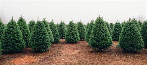 best nc christmas tree farm 5 best tree farms near boston nearest