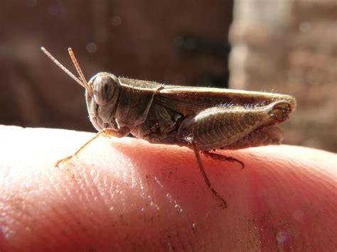 Gambar : jari, serangga, kecil, fauna, invertebrata ...