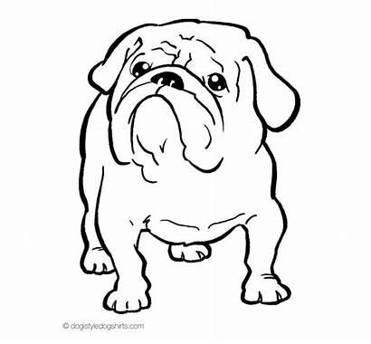 Bulldog Coloring English Dog Dogs Bull Desenhos