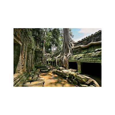 Massive roots in Ta Prohm Temple: Mikel Roncal: Galleries