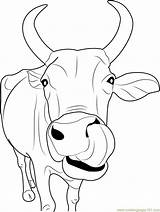 Cow Face Indian Coloring Coloringpages101 sketch template