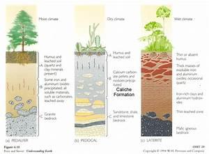 Skin Of The Earth  Soil