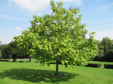 arbre à croissance rapide s 233 lection d arbres recommand 233 s pour faire une bonne sieste