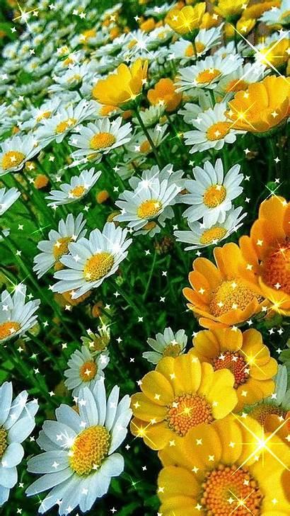 Flowers Flower Garden Daisy Pretty Gardens Yellow