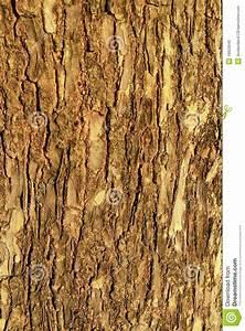 brown wood bark texture royalty free stock image image
