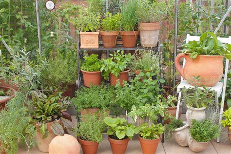 kraeuter pflanzen welche erde soll ich nehmen phlorade