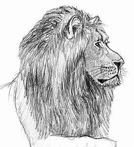 Zeichnen Lernen Mit Bleistift : einen l wen zeichnen lernen ~ Frokenaadalensverden.com Haus und Dekorationen