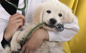 free animal clinic find the right vet clinic for your pet apartmentguide