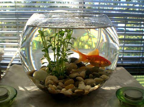 overview  fish bowls ratemyfishtankcom