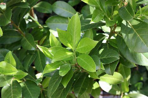 pflanzen als sichtschutz im garten oder auf dem balkon