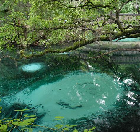 Fern Hammock Springs by Fern Hammock Springs Ocala National Forest Florida