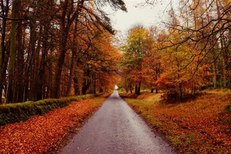 Autumn Road Pictures, Photos, and Images for Facebook