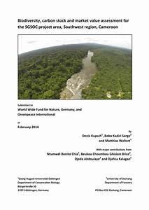 (PDF) Biodiversity, carbon stock and market value ...