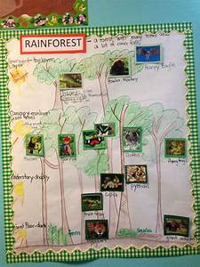 Rainforest Habitat Pictorial  Diagram  Input  This Concept