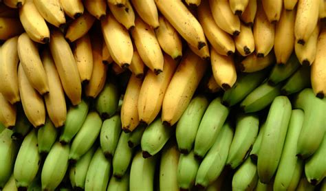 unripe  ripe bananas   choose