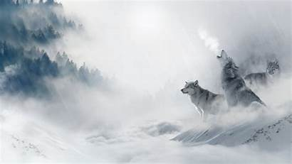 Wolf Howling Regras Wallpapers Servizi Comunidade Crm