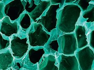 The Human Body Under The Microscope