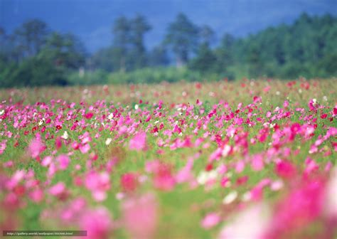 fond d écran fleur scenery pictures fleurs de printemps en fond d ecran
