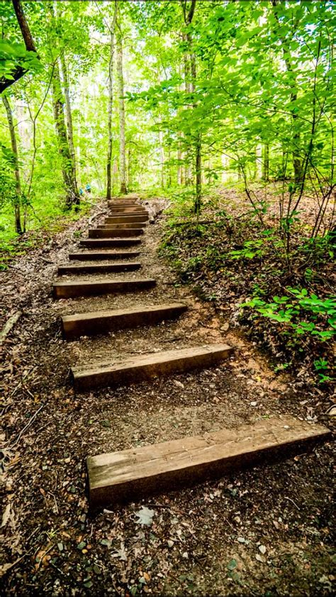 Forest hiking trail source Flickr.com   Outdoor stairs ...
