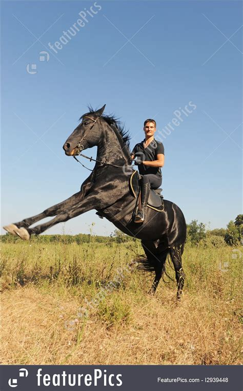 outdoor activity rearing horse stock picture