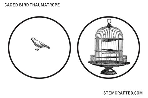 Thaumatrope Template Bird Cage quot caged bird quot thaumatrope disk printable stemcrafted
