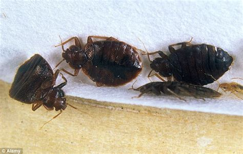 Bed Bugs Nyc by New York S Five Hotels Infested With Bed Bugs After