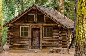 forest house wood chalet stump tree HD wallpaper