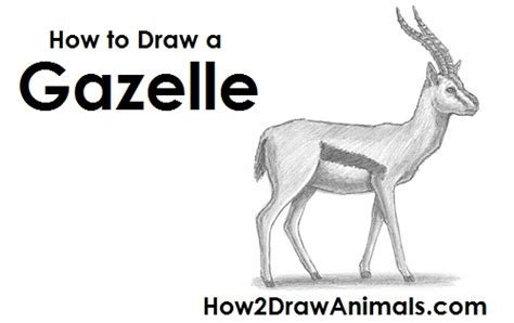 draw  gazelle