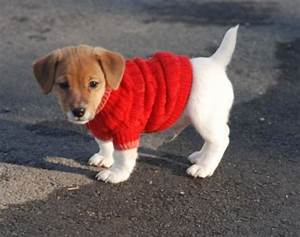 puppies in sweaters ha ha ha