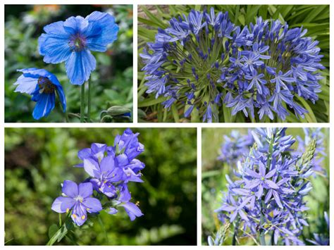 blue summer flowers blue flowers for your garden saga best blue flowers for your garden kopijoss net