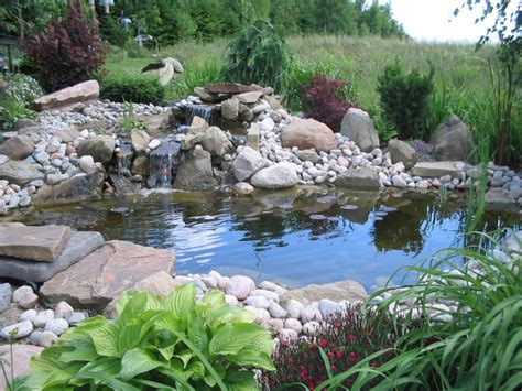 fish pond in garden how to take care of koi fish keep pond fish healthy and disease free koi fish care
