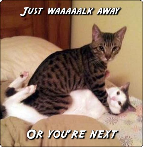 Cat Fight Meme - cat fight meme 28 images savage cat fight meme on sizzle 25 best memes about cats fight