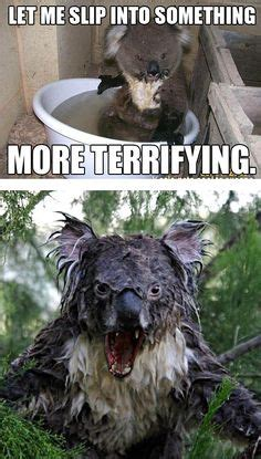 bears images  pinterest koala bears koalas