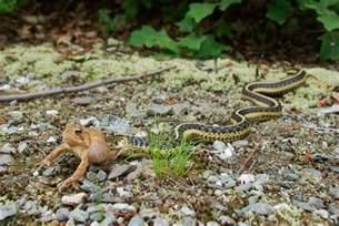 What Do Garter Snakes Eat