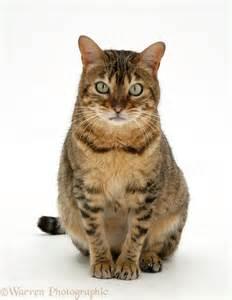 cat sitter cat sitting clipart