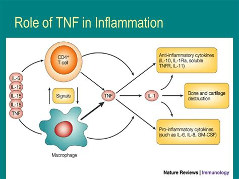 Tumor Necrosis Factor Inhibitors Box Warnings