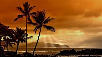 Wallpapers 1080 1920 Nature Palm Trees 1980