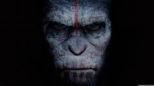 Dawn of the Planet of the Apes wallpaper | 3840x2160 | #28366
