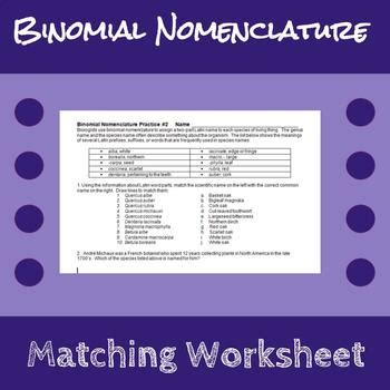 binomial nomenclature worksheet binomial nomenclature worksheet by erin frankson tpt