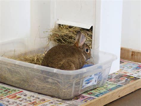 litter training your pet rabbit my house rabbit